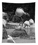 Odd Bird Out In Black And White Tapestry