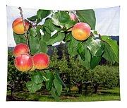 Okanagan Apricots Tapestry