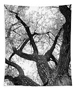 Old Cottonwood Tree Tapestry