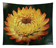 Orange And Yellow Strawflower Tapestry