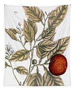 Orange Tree, 1735 Tapestry
