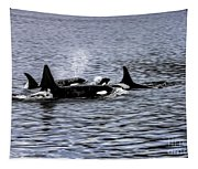 Orcas, The Killer Whales Tapestry
