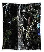 Oregon's Crater Lake Tree Tapestry