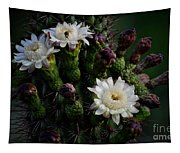 Organ Pipe Cactus Flowers  Tapestry