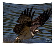 Osprey Catching A Fish Tapestry