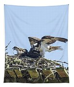Osprey Family Portrait No. 1 Tapestry