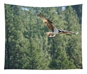 Osprey In Flight 6 Tapestry