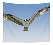 Osprey Soar Search Tapestry