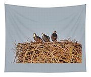 Osprey Young Tapestry