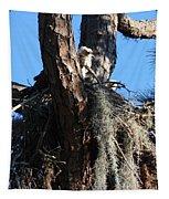 Ospreys In Spanish Moss Nest Tapestry
