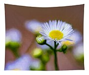 Oxeye Daisy - Paint Tapestry