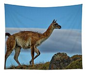 Patagonian Guanaco - Chile Tapestry