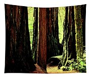 Path Through The Forest Edge . 7d5432 Tapestry