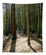 Path Through The Woods. Tapestry