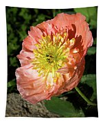 Peach Colored Poppy Tapestry
