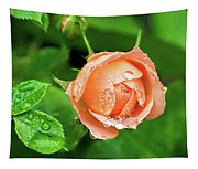Peach Rose In The Rain Tapestry