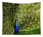 Peacock At Frankenmuth Michigan Tapestry