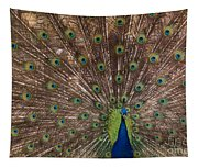 Peacock At The Fort Tapestry