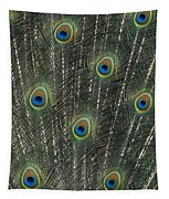 Peacock Feathers Tapestry