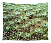 Peacock Tail Feathers  Tapestry