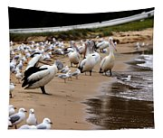 Pelicans At Pearl Beach 1.0 Tapestry