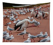 Pelicans At Pearl Beach 3.0 Tapestry