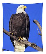 Perched Bald Eagle Tapestry