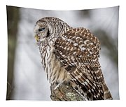 Perched Barred Owl Tapestry
