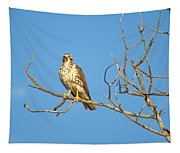 Perched Poser Tapestry