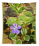 Periwinkle Tapestry
