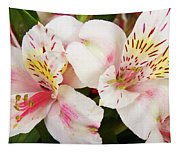 Peruvian Lilies  Flowers White And Pink Color Print Tapestry