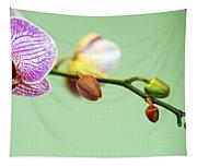 Phalaenopsis Tapestry