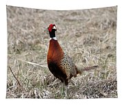 Pheasant Rooster Tapestry