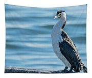 Pied Cormorant On Old Wharf Tapestry