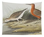 Pigmy Curlew Tapestry
