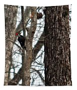Pileated Billed Woodpecker Tapestry