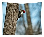 Pileated Billed Woodpecker Pecking 2 Tapestry