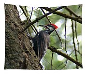 Pileated Woodpecker Tapestry