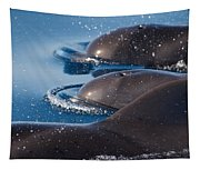 Pilot Whales 1 Tapestry