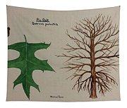Pin Oak Tree Id Tapestry