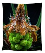 Pine Cone Focus Stack Tapestry