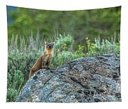 Pine Marten With Attitude Tapestry