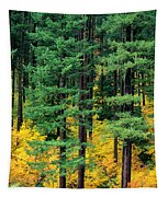 Pine Trees In Autumn Tapestry