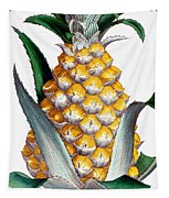 Pineapple, 1789 Tapestry