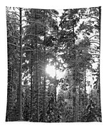 Pines 3 Tapestry