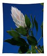 Pink King Protea Kula Maui Hawaii Tapestry