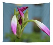 Pink Lily Bud Tapestry