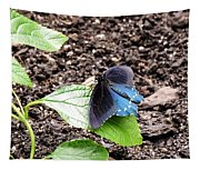 Pipevine Swallowtail Butterfly Tapestry