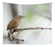 Portrait Of A House Wren Tapestry