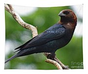Posing Brown-headed Cowbird Tapestry